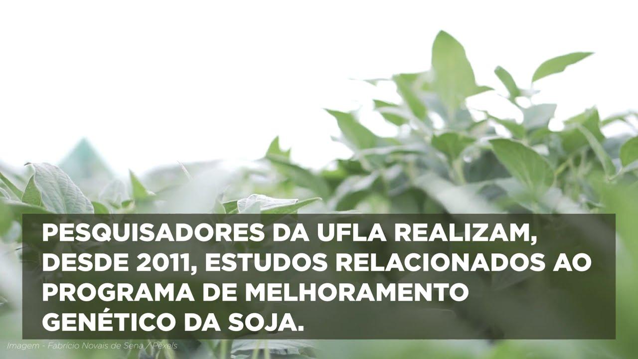 UFLA lança primeira cultivar de soja e realiza feito inédito para a região