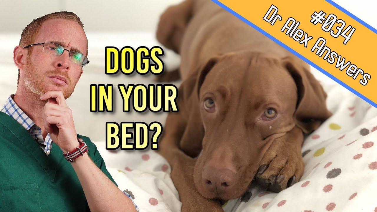 Should Your Dog Sleep With You In Bed Under The Covers Dog Health Vet Advice Youtube
