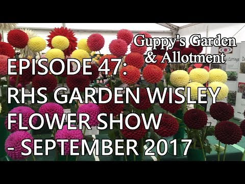 Episode 47: RHS Garden Wisley Flower Show - September 2017