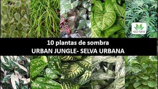10 Plantas Especiais Para Plantar na Sombra – Dicas Maravilhosas