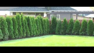 Abbotsford Cedar Tree Siding - The Cedar Guy In Action