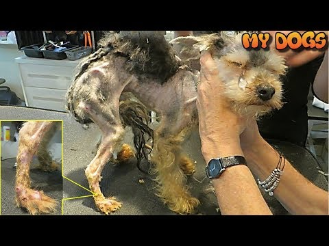 Rescue a Homeless Dog Was Horribly Neglected. His Transformation Will Melt Your Heart.