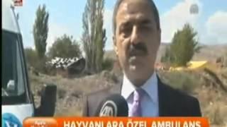 Çankırı Belediyesi Hayvan Ambulansı A Haber'de