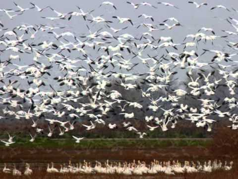 Gray Lodge Wildlife Area...Wetlands!