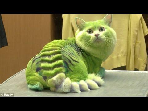 Video Kucing imut Menggemaskan unyu_BIKIN GEMES