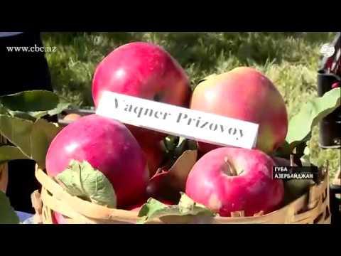 Халва специально для Sputnik от шекинского халвачи - YouTube