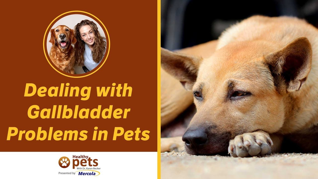 Gallbladder Problems In Pets