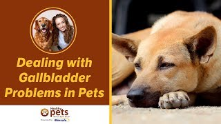 Dealing with Gallbladder Problems in Pets