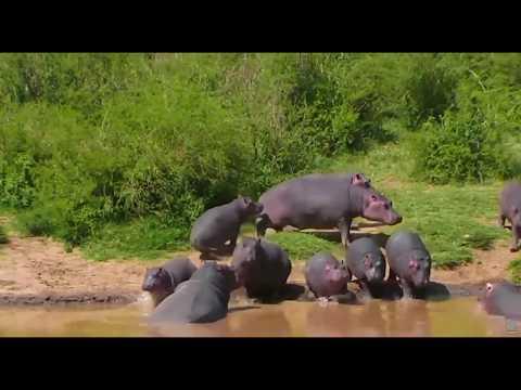 African Wildlife - Laikipia County, Kenya