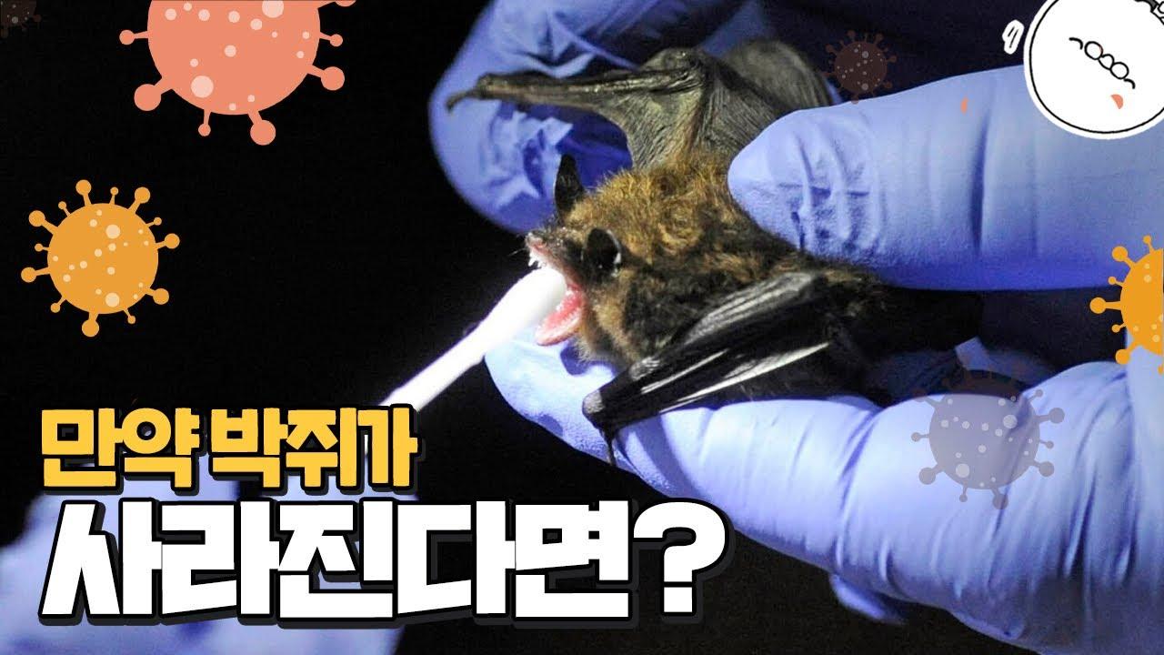 대체 박쥐는 왜 존재할까? 박쥐가 사라지면 전염병이 없어질까? [미나니의 스낵교양]