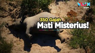 Bangkai Dimana-mana, Ratusan Gajah Mati Misterius