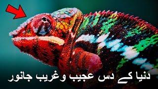 Top 10 Creepiest Animals in the World | Urdu/Hindi