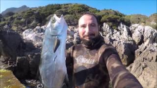 Circeo - un aspetto alla leccia. Spearfishing 3-6-016