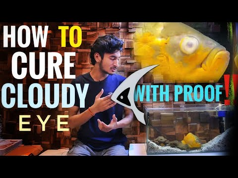 Treatment Of Cloudy Eye, Hole In The Head, Fin Rot & White Patch Of A Fish | With Proof | In Hindi