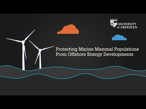 Protecting Marine Mammal Populations From Offshore Energy Developments