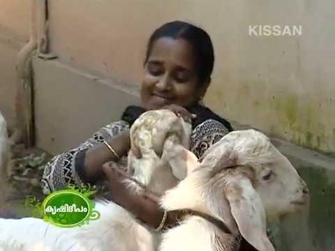 Success story of Mrs. Beena Sahadevan - State Award winner - Thrissur, Mathilakam-602
