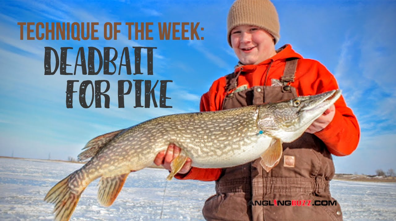 Deadbait fishing for pike on ice peter olson lake for Lake sakakawea fishing report
