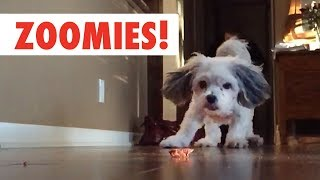 Zoomies! | The Fastest Pet Compilation of the Year | The Pet Collective