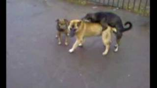 Собачья Групавуха