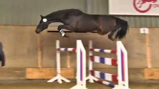 Stallion Lantini X Corrado