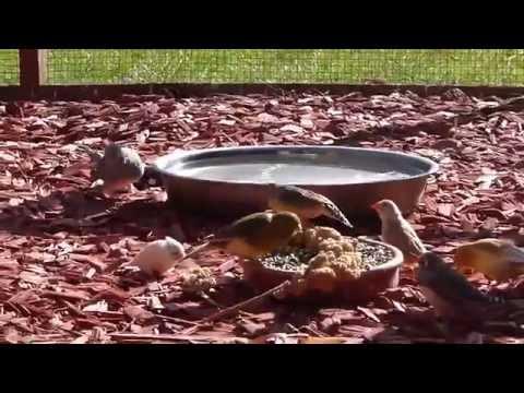 volière vogels