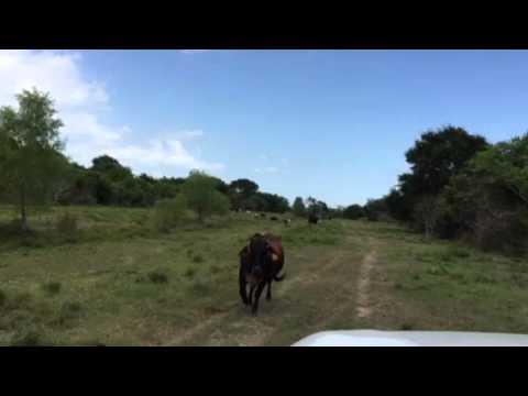 NRS Pierce Standard Cattle Siren