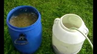 Как сделать солод из зерна