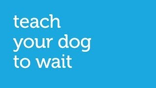 How To Teach Your Dog To Wait At The Door (petco)
