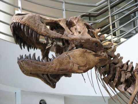 Largest Trex Fossil Found -world