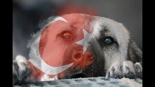 Türkiye'nin en iyi Çoban Köpekleri müzikli