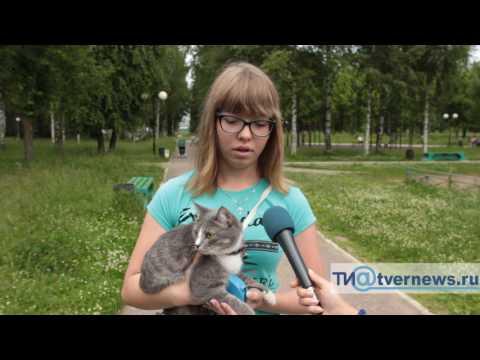 В Твери девушка научила свою кошку собачьим командам
