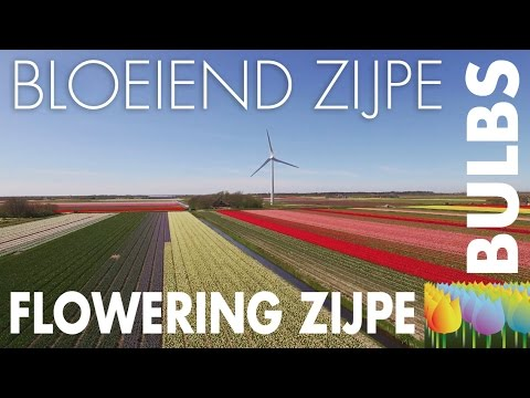 Flower bulb event Flowering Zijpe (Bloeiend Zijpe) - Holland Holiday