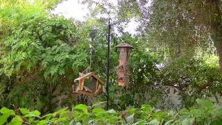 The Bird Feeders (hd) - Cat Television!