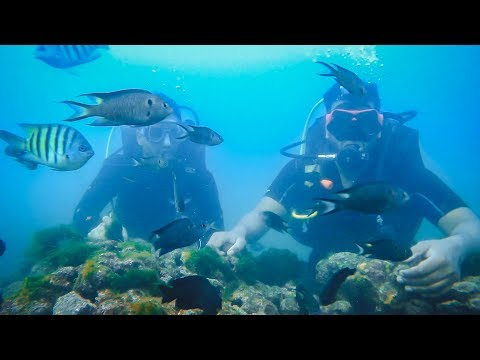 Cheapest Scuba Diving In India!!
