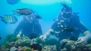 scuba diving (interest)
