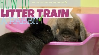 HOW TO LITTER TRAIN A RABBIT 🐰