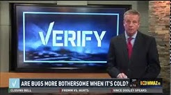 Arrow Exterminators Shares Cold Weather Pests Tips