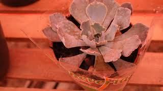 Primeira Flor da Gerbera e Mais Comprinhas