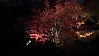 興臨院秋のライトアップ/Kohrin-in temple illuminated thumbnail