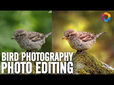 Birds Photography Editing and Blending (PSD Box)