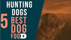 Best Dog Food For Hunting Dogs   Top 5 Gun Dog Food.