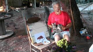 Barn Cat Training Video