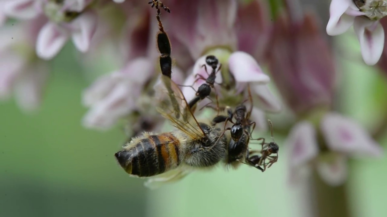 Honey Bees And Foraging Behavior Flowers For Pollenation And Nectar