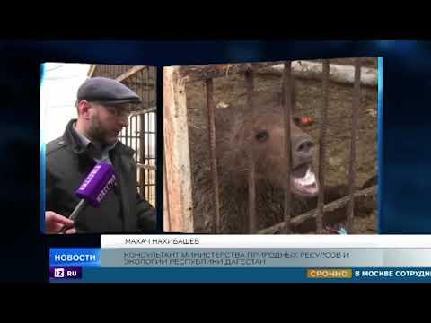 Двух медведей обнаружили в вольере на брошенной автозаправке в Дагестане