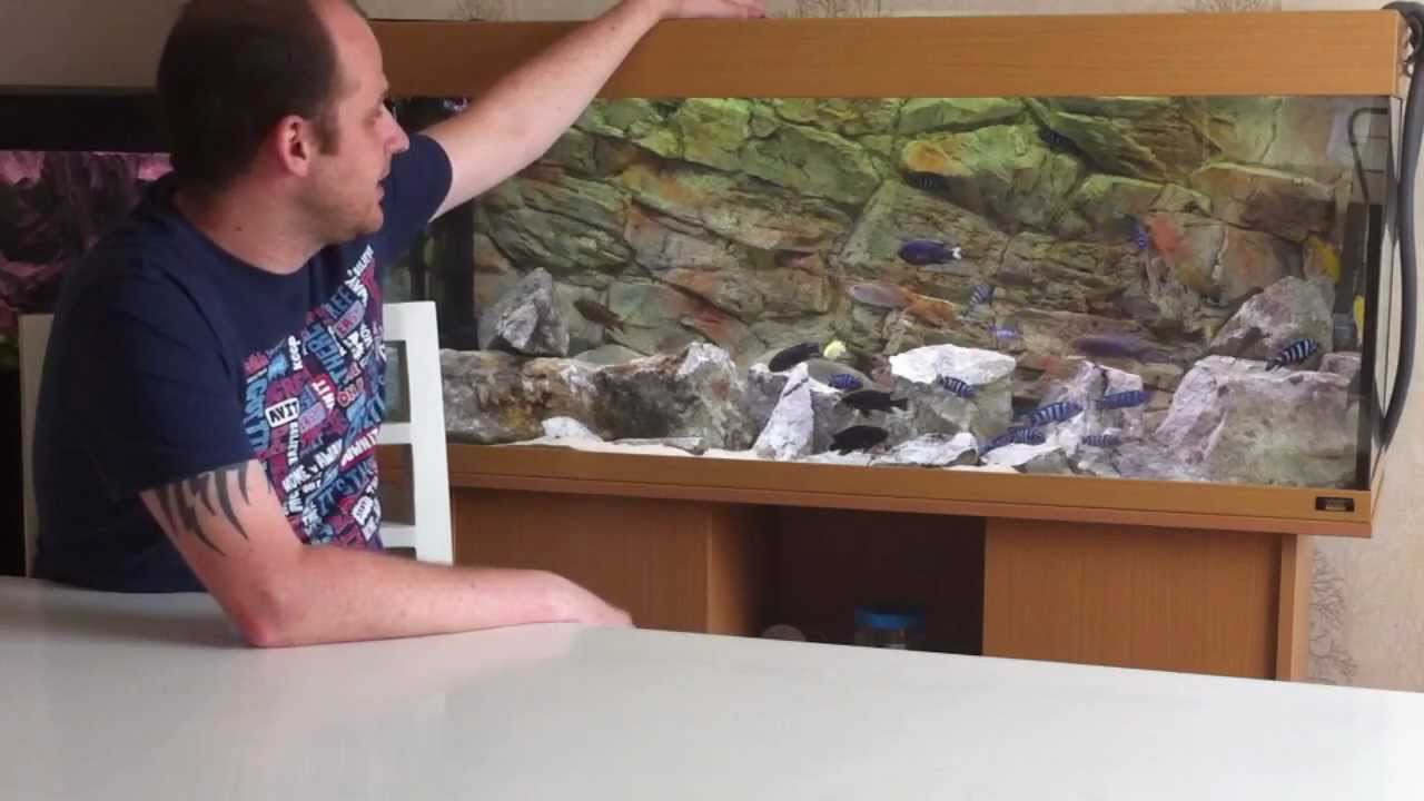 How to set up an african cichlid tank setting up your for How to set up fish tank