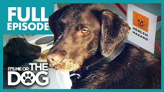 The Filthy Chocolate Lab: Teo | Full Episode | It's Me or the Dog