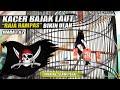 Kacer Bajak Laut  Raja Rampas  Milik Iman Ab Slawi Tegal  Mp3 - Mp4 Download