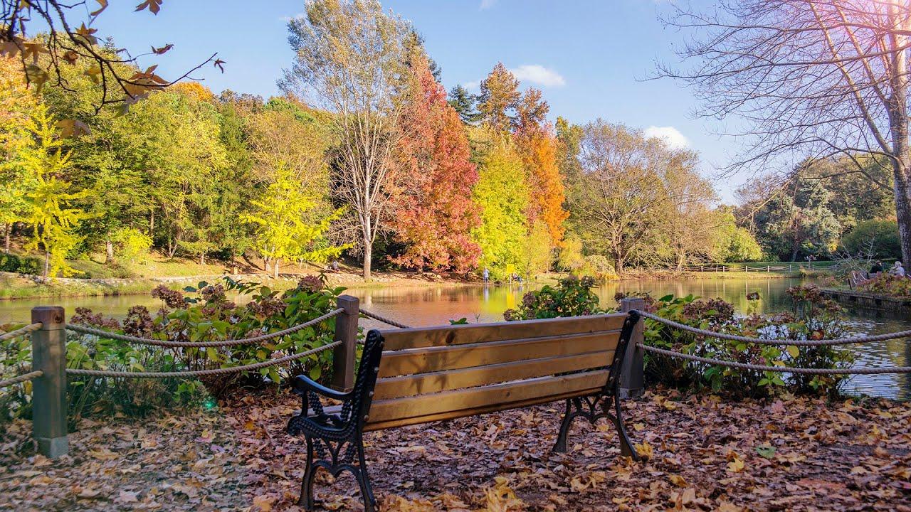 Sarıyer - ATATÜRK ARBORETUMU (Tanıtım, Özellikleri, Sonbahar HD Görüntüler)
