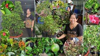 CHÀO BÁN NHIỀU LOẠI CÂY KIỂNG về ngày 20/9/2020🌻0767 524 992 CHỊ HẰNG🌻 bonsai Can Tho