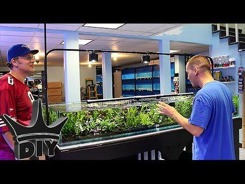 My local Aquarium fish store TOUR